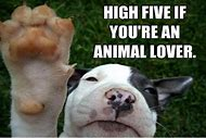 High Five Funny Animal Quotes