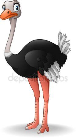 ostrich stock vectors royalty  ostrich illustrations