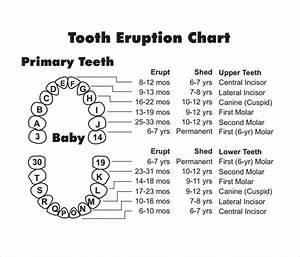 11  Teeth Chart Templates