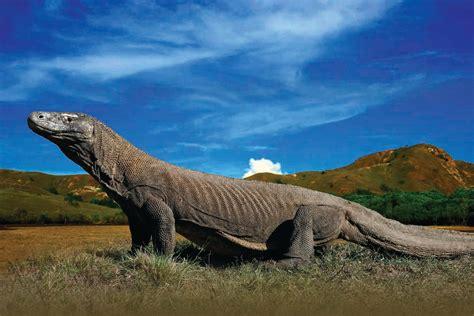 amazing  komodo national park indonesia