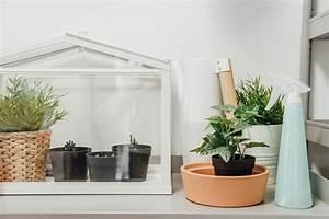 Gewächshaus In Der Wohnung : indoor gew chshaus das treibhaus f r drinnen ~ Markanthonyermac.com Haus und Dekorationen