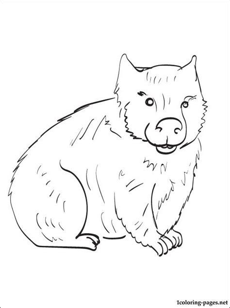 wombat coloring   designlooter