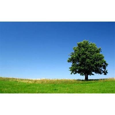 Beautiful Tree - Wallpaper #31613