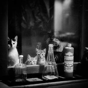 Fenster Aus Ungarn : katzen fotos bilder auf fotocommunity ~ Markanthonyermac.com Haus und Dekorationen