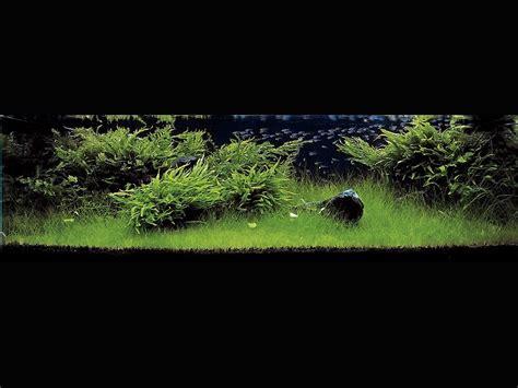 Ada Aquascaping Contest by Bilinick Ada Aquascape Contest 2005 Pics