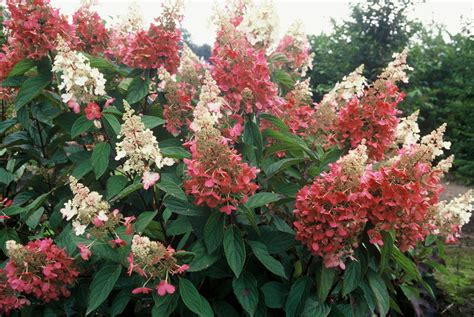 Top 10 Flowering Shrubs  Garden Housecalls