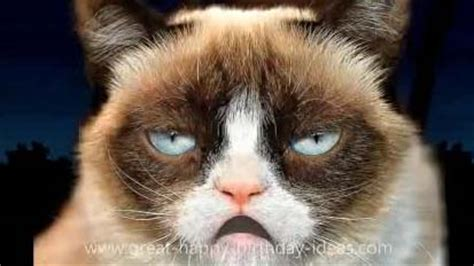 grumpy cat happy birthday song  funny birthday wishes