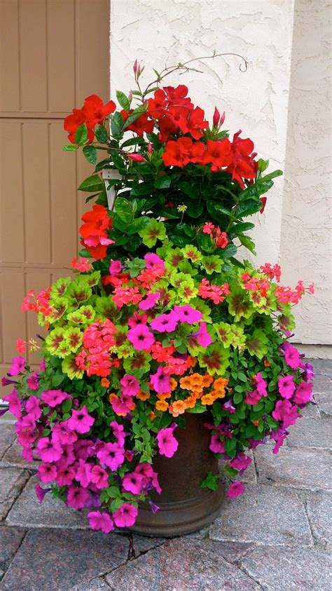 outdoor potted plants sun 94 best images about container gardens on pinterest window boxes canna and maidenhair fern