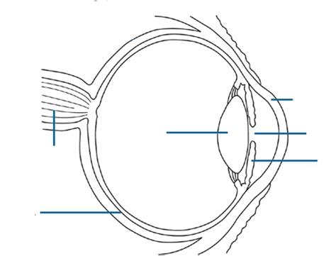 Eye Diagram To Label Kifd by Anatomy Eye Diagram To Label Science Experiments