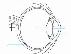 Anatomy  Eye Diagram To Label
