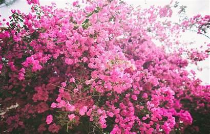 Petals Bush Flowers Pink вконтакте Telegram