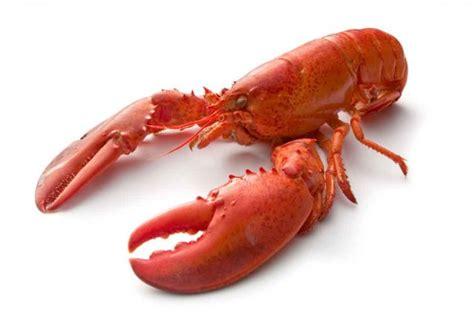 cuisiner un homard vivant homard conseils pour une cuisson parfaite stéphanie
