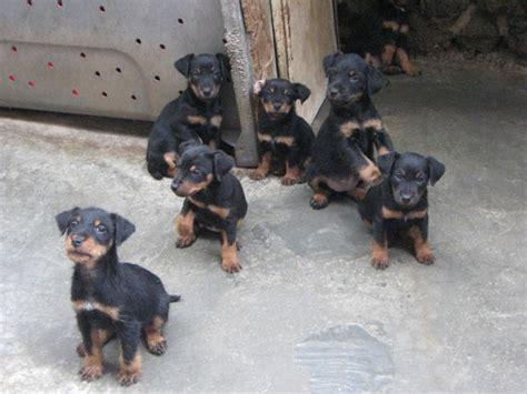 Croquettes pour chien et croquettes premium pour chien - Croquetteland