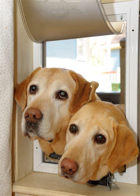 dog trainer   introduce   dog   dog
