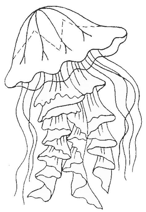 meduza raskraska sea art coloring pages sea turtle