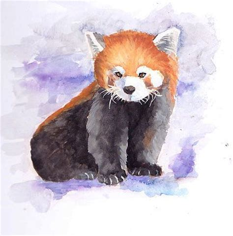 red panda drawing  bit   lot  red panda