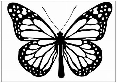 Butterfly Clipart Coloring Pages Clip Drawing Monarch