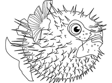 puffer fish sea squab puffer fish coloring page