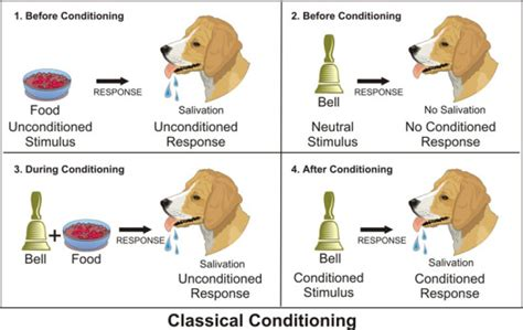 examples  classical conditioning