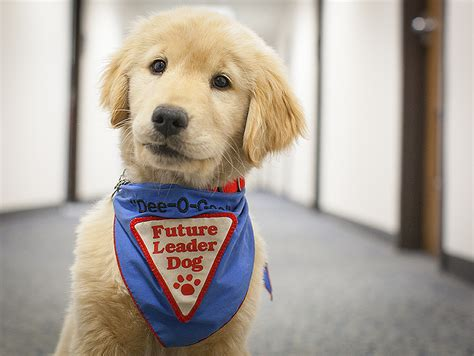 leader dogs for the blind nasa nasa langley welcomes a new leader