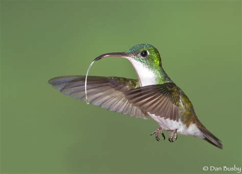 hummingbird tongue and cheek pictures i like pinterest