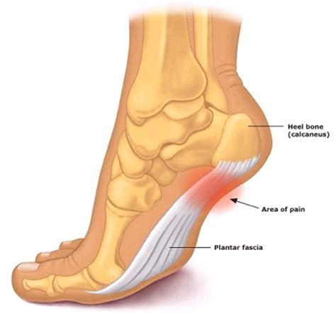 Diagram Of Heel Structure by Best Walking Top Shoe Comparisons And Reviews Best