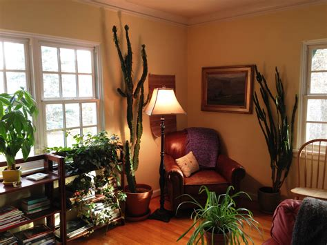 Lucky Bamboo In Bedroom Feng Shui Home Delightful South
