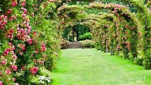 Nature Rose Garden Hd Wallpaper Photos Of Mobile Pics ...