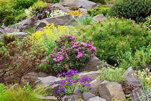 Steinbeet Pflanzen Winterhart : die 10 sch nsten pflanzen f r den steingarten plantura ~ Watch28wear.com Haus und Dekorationen