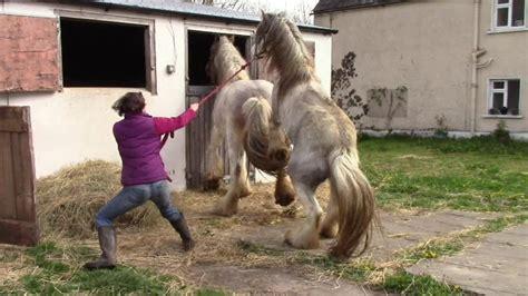 Youtube Pferde Beim Decken  Home Image Ideen