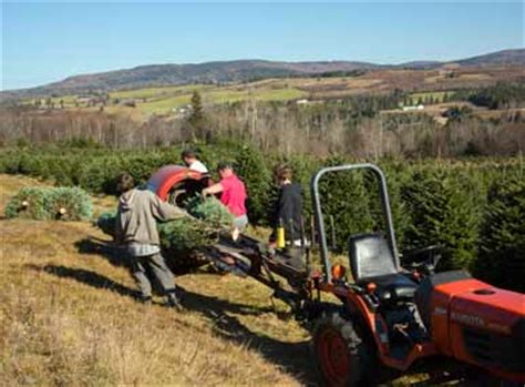 news from the farm weir tree farms colebrook new hshire