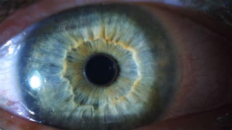 eye iris  pupil macro stock footage video
