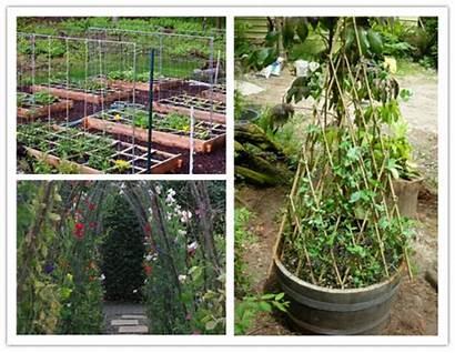 Diy Trellis Garden Pea Creative Round Ways