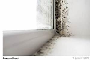 Mellerud Schimmelpilz Test : schimmel test auswerten tipps hilfe im mellerud ratgeber forum ~ Eleganceandgraceweddings.com Haus und Dekorationen