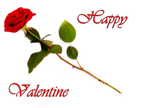valentines day roses clipart weneedfun