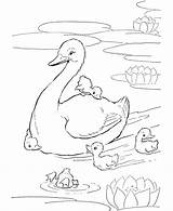 Pond Coloring Pages Ducks Duck Printable Farm Adult Animal Animals Colouring Cartoon Honkingdonkey Print Books sketch template