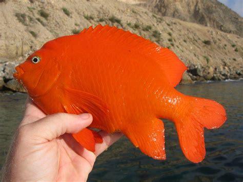gram rule fishs blog steve wozniaks