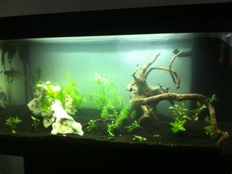 mise en eau aquarium photos d aquarium page 238
