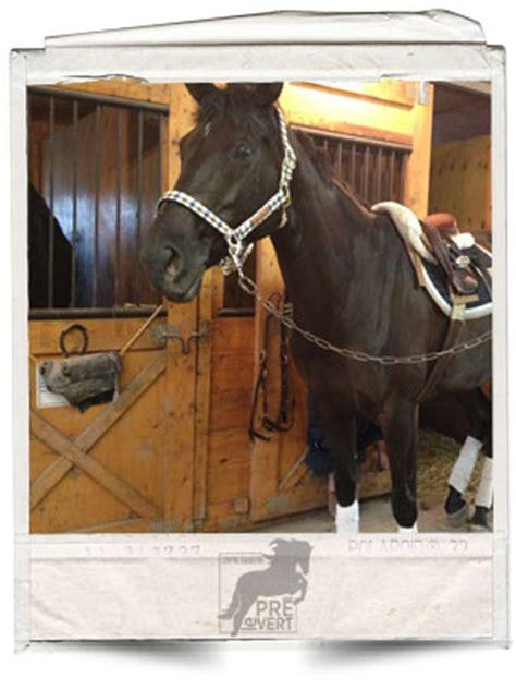 centre 201 questre du pr 233 vert pensions pour chevaux