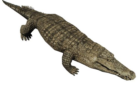 Crocodile - Official The Forest Wiki