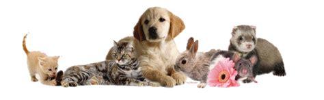 pat les animaux de compagnie animaux de compagnie