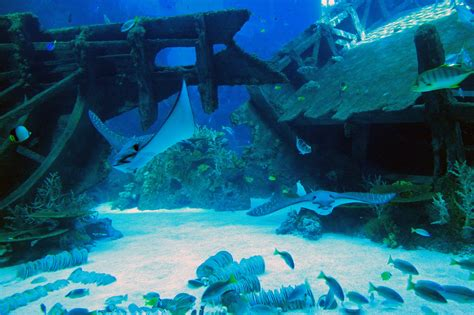 marine park aquarium in sentosa thousand wonders