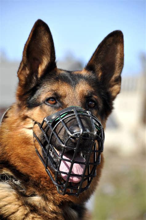dog trainer muzzles