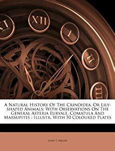 natural history   crinoidea  lily shaped animals
