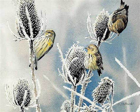 famous watercolor paintings  birds weneedfun