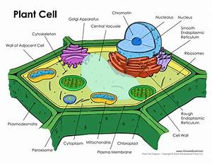 Plant Cells  U2013 Sica Science