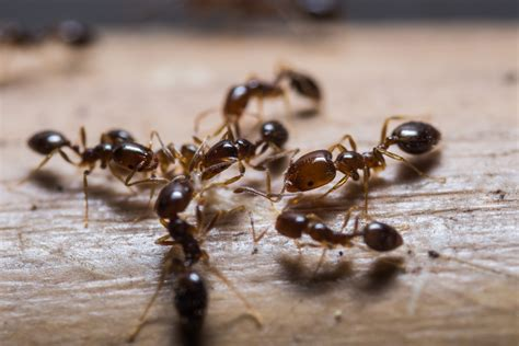 tiny ants in kitchen around sink how to get rid of ants in the kitchen non toxic homemade