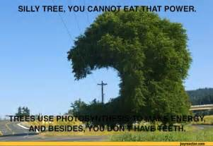 silly tree you pictures pictures best jokes comics images humor