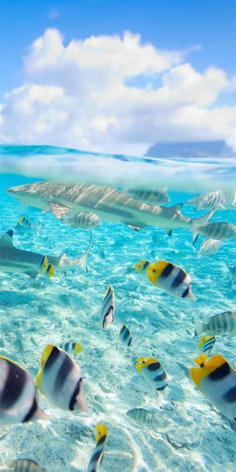 Best 25 Bora Bora French Polynesia Ideas On Pinterest