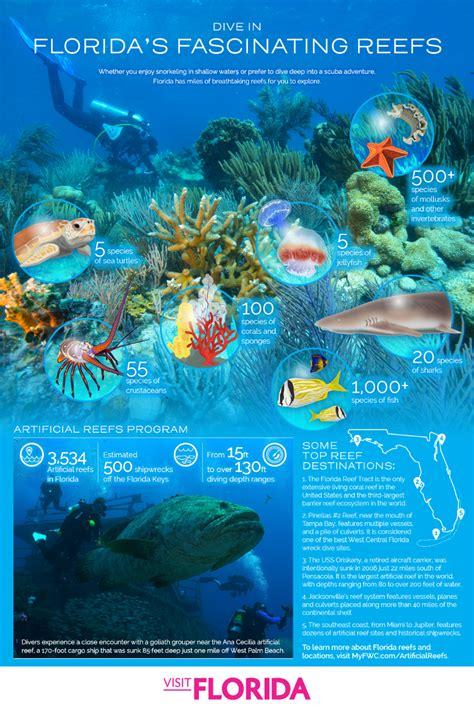 florida snorkeling diving dive scuba spots map places snorkel reefs visit things visitflorida maps infographic